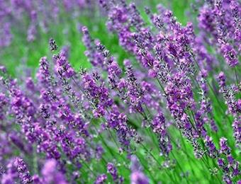 自然芬芳,香味营销的魅力